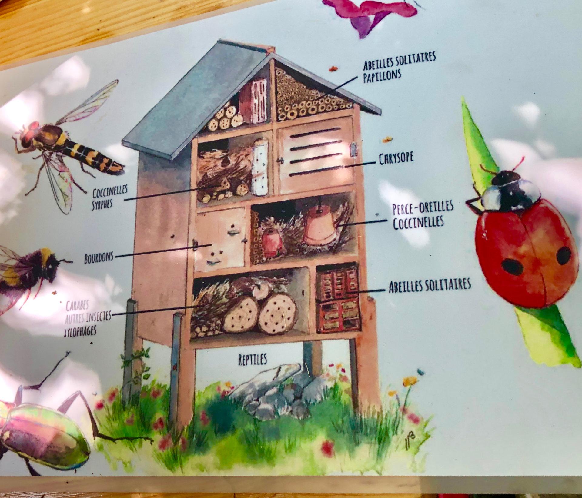 Création d'habitat pour insectes